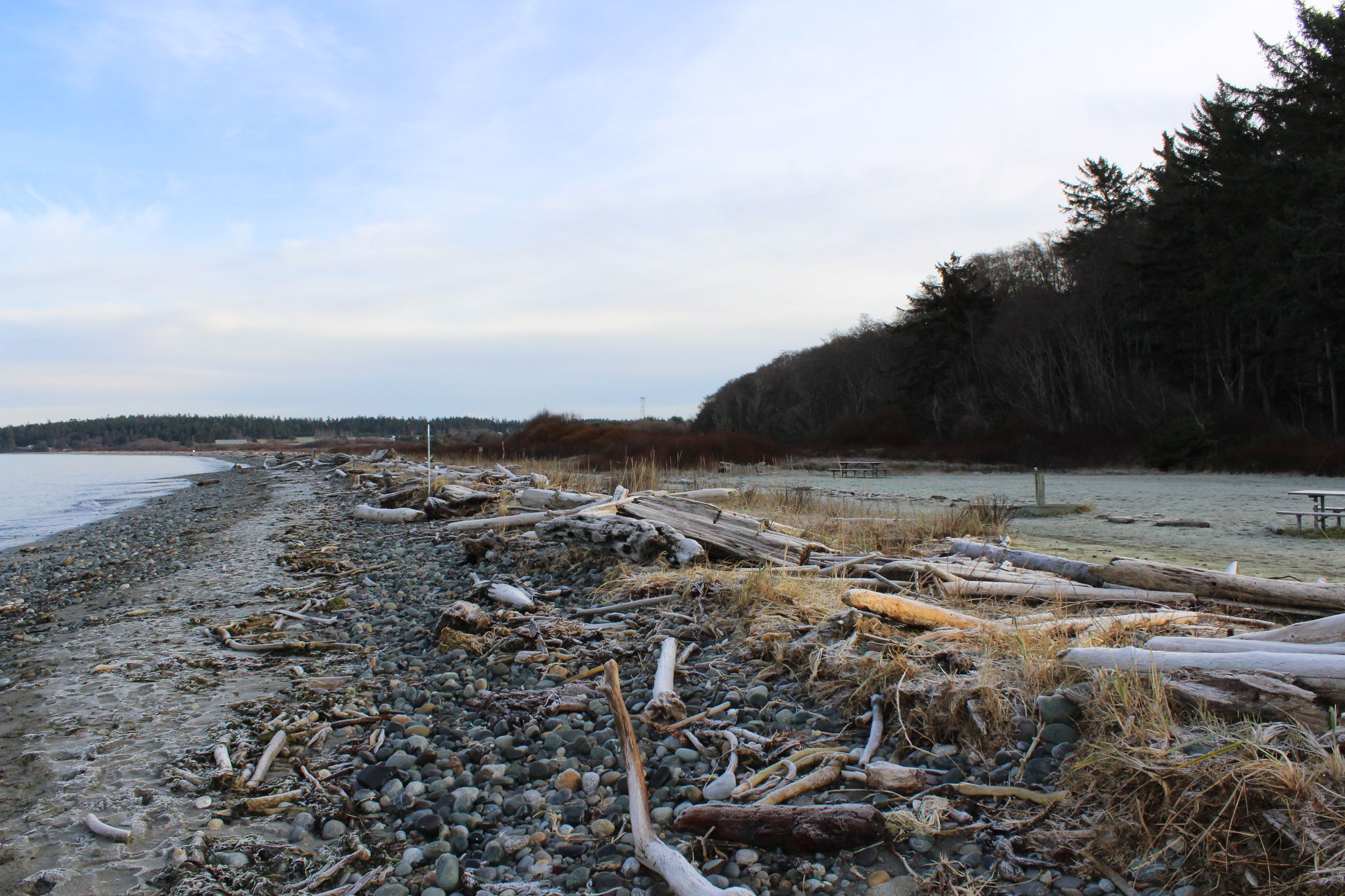 Wood debris on a shoreline with trees in background