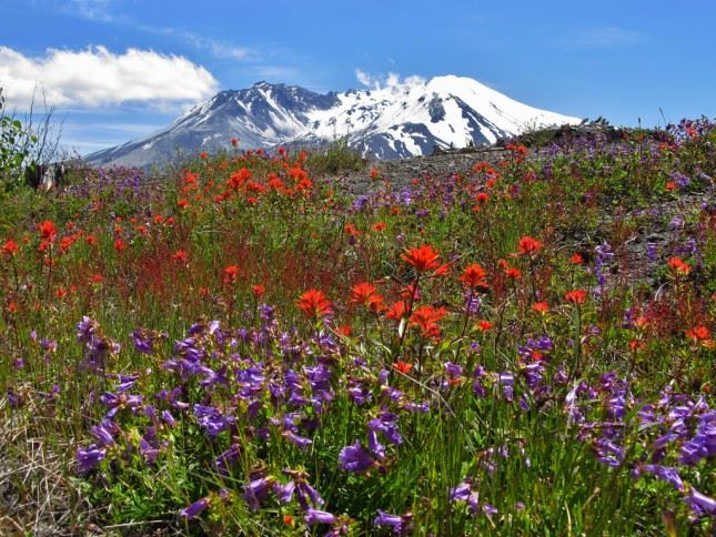 Where were you when the mountain blew? Once devoid of life, Mount St. Helens is now the poster child