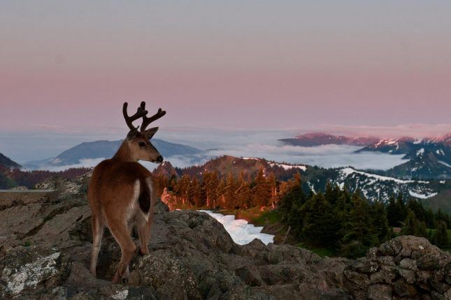 Celebrating the centennial - Olympic National Park