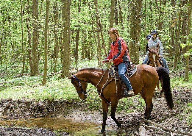 Horses-on-Trail-