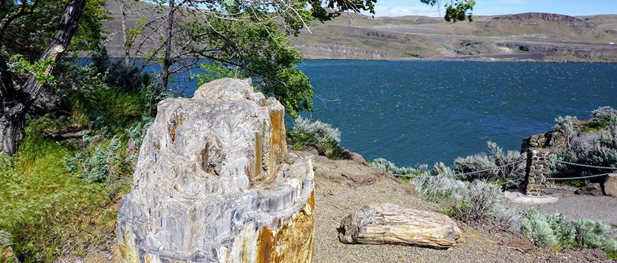 A view of the Columbia River is seen from behind a piece of petrified wood at Ginkgo Petrified Forest State Park.
